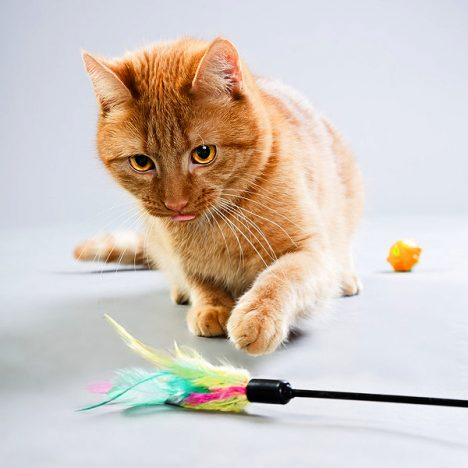 Everything to Know about Cat Toys, Food and Supplies