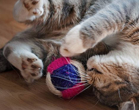 4 Tips to Keep in Mind When Buying Cat Toys